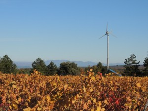 La vigne en Ardèche